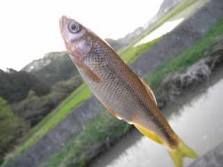 fish_g01.jpg