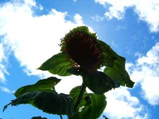 flower_25.jpg