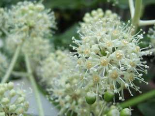 flower_31.jpg
