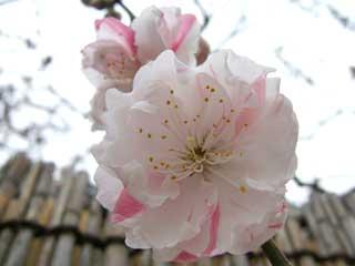 flower_33.jpg