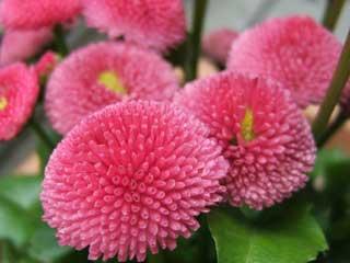 flower_36.jpg