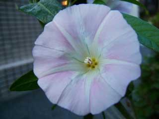 flower_40.jpg