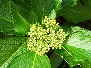 flower_41.jpg