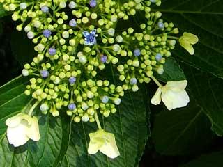 flower_42.jpg