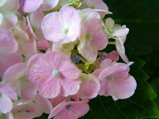flower_44.jpg