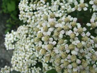 flower_45.jpg