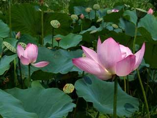 flower_46.jpg