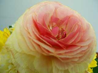 flower_47.jpg