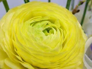 flower_48.jpg