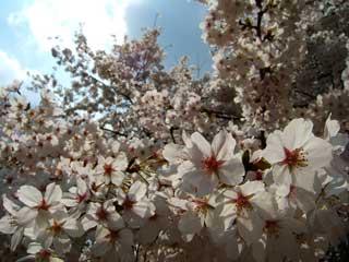 flower_49.jpg