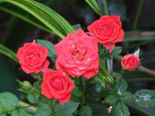 flower_50.jpg