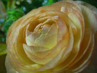 flower_g01.jpg