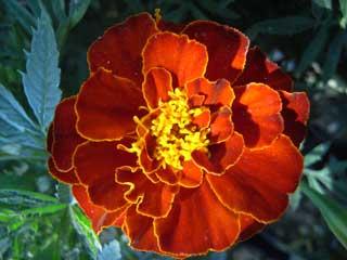 flower_g06.jpg