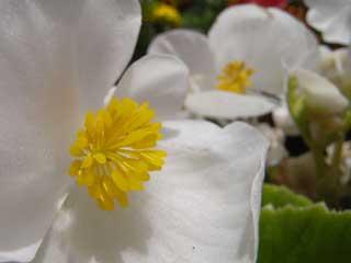 flower_g07.jpg
