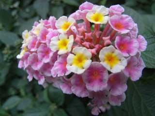 flower_g08.jpg