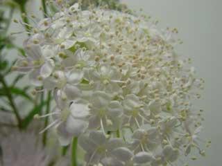 flower_g10.jpg