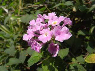 flower_g11.jpg