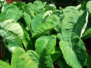 plant_09.jpg