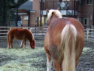 pony_01.jpg