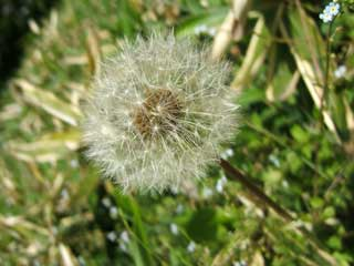 seed_01.jpg