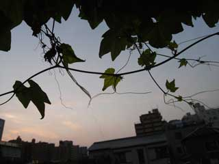 sunset_g01.jpg