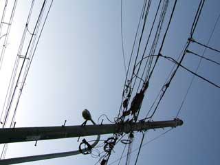 wire_01.jpg
